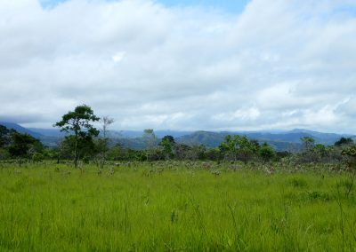 Explore raw land with endless possibilities - Panama
